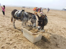 Weston-Super-Mare, Donkeys on the beach, Somerset © Chris Whippet